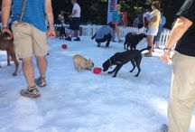Petco Unleashed Summer Snow Days / by KONG Company