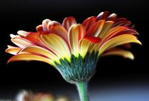 Photography / Tutorials and ideas / by Kathy Hayes