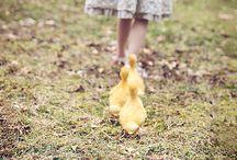farmgirl / by Betty Zaccagni