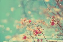 Pretty Flowers and Gardens / by Love Lolly