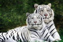 Wild Animals I Love / by Loretta Wyatt