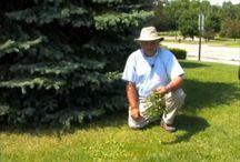 Weeds / by Backyard Farmer