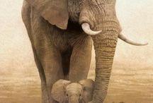 Elephants  / by Kelly Mazzolini