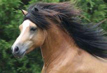 Horse / by Bonnie Koenig