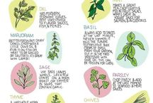 herbs / by Janet Boyes