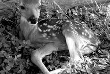 Animals / by Vanessa Ballard