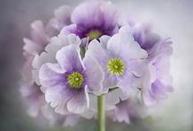 Flowers / by K.A.M. GreenOaks
