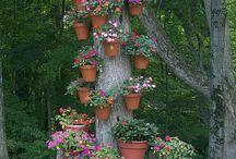 Garden/yard ideas / by Sheila Jennings Primeau