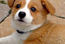 Corgis! / Cutest pups around / by Sami Emmons