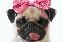 A Pugs Life / Sweet dogs / by Debbie Campbell