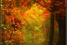 Seasons / by Jo Nelson