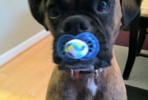 Beautiful boxers babies:)) / by Kari Coleman