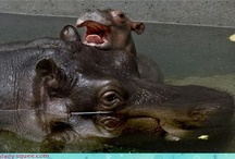 hippo happiness  / by Ashley West