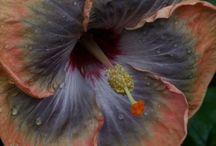 Flower  / by Minda Bouanda