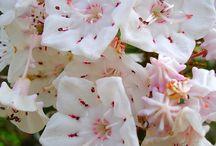 Flowering Shrubs / by LAWN-N-ORDER