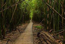 Hawaii / by Stephanie Vittoe