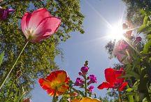 Flowers / by Deb Cardona