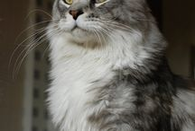 Feline Fetish / So I love cats...do you? / by Donna Leslie