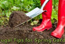 Gardening Tips / Gardening for the frugal / by BillCutterz
