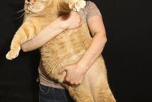 pets / by Mandy Lonergan