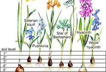 Garden how to's & ideas / by Debbie Swank