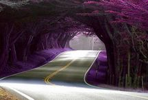Gardening, Flowers, Plants  / Flowers, Nature, Outdoors / by Me-Lanie Mattox