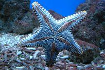 starfish / by Liz Clark