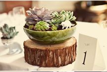 Wedding Theme - Succulents / by Milestone Events
