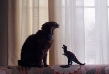 cats / I simply love cats! / by Pat Jedruszek