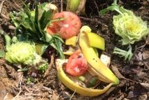 Composting / by Elise White