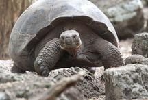 Lonesome George, Galapagos Icon / by My Life's A Trip