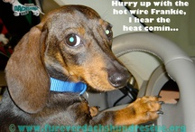 Our Funny Captions / by Furever Dachshund