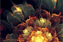 Flowers / by Miriam Gail Livingston