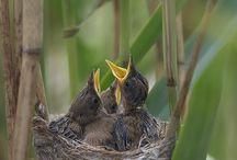 Birds / by Kim Ballard