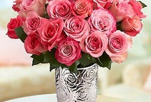 Flowers & Gifts / by PriceScaler.com