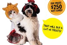 Deals Pets Love / Great products and better prices; that's what we're all about. But we know you love a little more every time we throw you a bone...in the form of a coupon, that is! Check here for new deals, and repin, repin, repin! / by Pet Supplies Plus