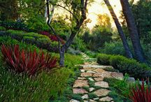 Gardening / by Holly Ireland
