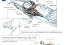 Chest Exercises / by CTD Sports