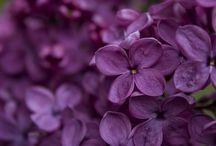 Plantes / Plantes i Flors / by Xuti Genis