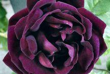 Purple Tones - Our Favorite! / As you can see, we love purple pantone colors! / by Royal Regency Hotel