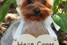 Dogs & Animals in Weddings / Dogs/Animals Weddings & Beautiful, Fun & Creative Weddings !!! / by Lauri Oberlander