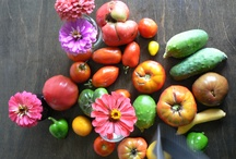 Harvest / by Emma Major