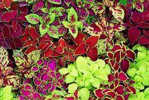 ~FLOWERS*SUCCULENTS*CACTUSES~ / by DanaShane Rowan