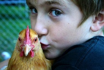 chickens & other farm fun / by biobabbler