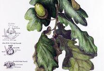 botanical illustration / by Stefanie Carter