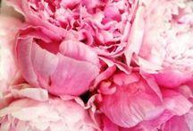 Flowers / by Kate Elizabeth Jean