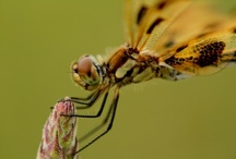 insects / by mary l hager