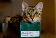Cat in box, a love story  / by Peggy Hollenbach