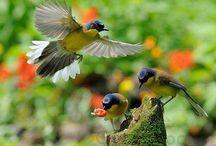 Beautiful birds / by Silvia Valldeperas