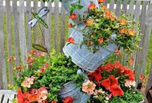 Garden - Containers / by Rosemary Jayne